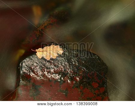 Autumn Colorful Leaf. Castaway On Wet Slipper Stone In Stream