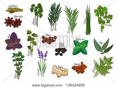 Spice and kitchen herb, condiment. Cardamom and star anise, cilantro and coriander, rosemary and tarragon, chives and parsley, basil and oregano, black pepper and peppermint, sage and thyme, lavender or lavandula and ginger, cinnamon and dill