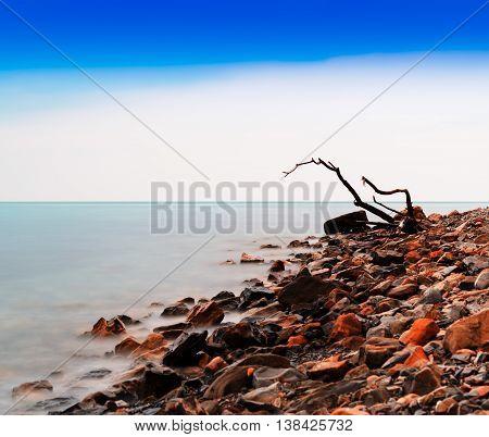Horizontal Vivid Tree Snag On Rocky Beach Bokeh Background Backd