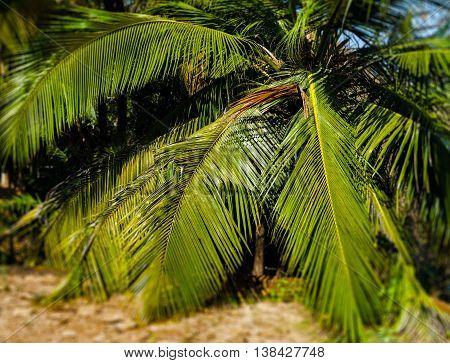 Horizontal vivid palm tree leaves bokeh background backdrop