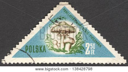 MOSCOW RUSSIA - CIRCA JANUARY 2016: a post stamp printed in POLAND shows a mushroom Psalliota campestris the series