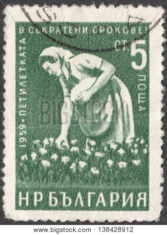 MOSCOW RUSSIA - JANUARY 2016: a post stamp printed in BULGARIA shows a woman - cotton-picker the series