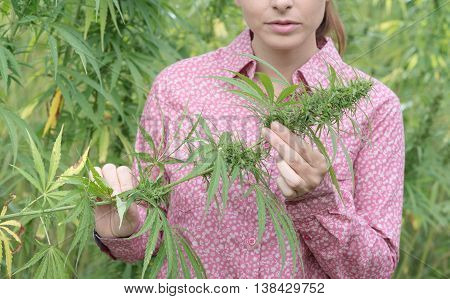 Woman Holding An Hemp Flower