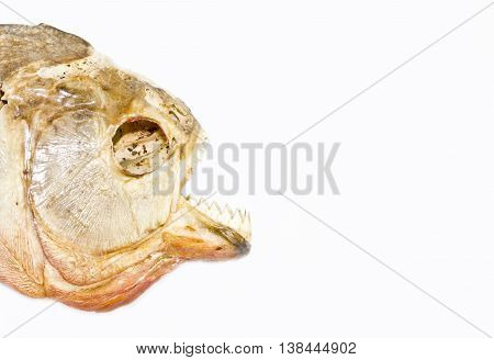 Close Up of A Piranha on white background