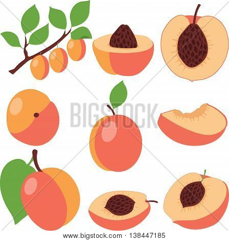 Peach. Set peaches, pieces and slices, collection of vector illustrations on a transparent background