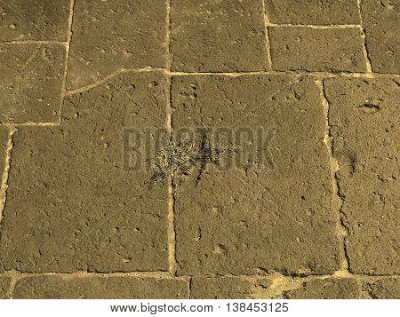 Roman Floor Sepia