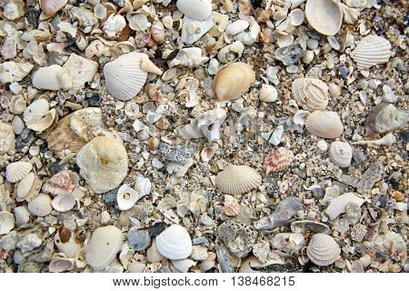 Florida Sanibel Island beach sea shells sand in USA