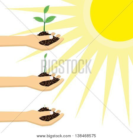 Person holding a young plant under the sun. Plant growing concept.