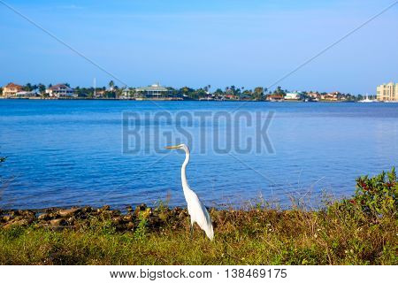 Naples Florida Marco Island view heron bird in Florida USA