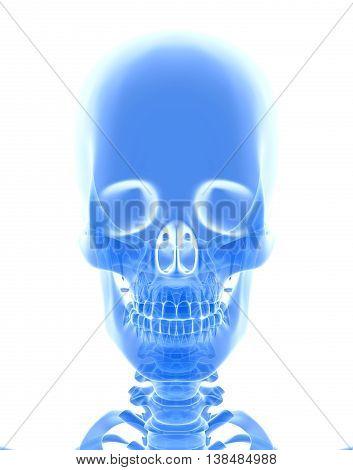 3D Illustration Of Cranium, Medical Concept.