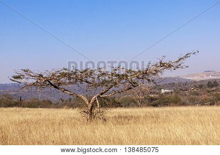 Parched dry winter grass trees and sky on rural landsacpe in South Africa