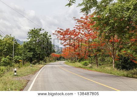 Road beautiful forest and flower wayside background