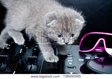 British shorthair kitten on the remote DJ.