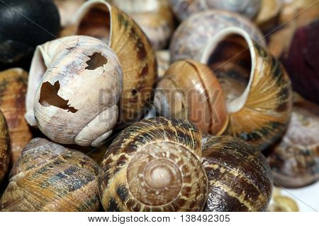Close up of Broken and whole snail shells