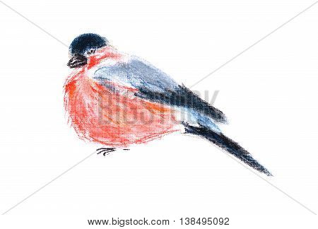 Figure of the bird isolated on white background. Colorful cute bullfinch. Pastel, hand drawn graphic illustration. Fauna, ornithology, nature.