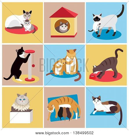 Set of cute cartoon cats (vector illustration)