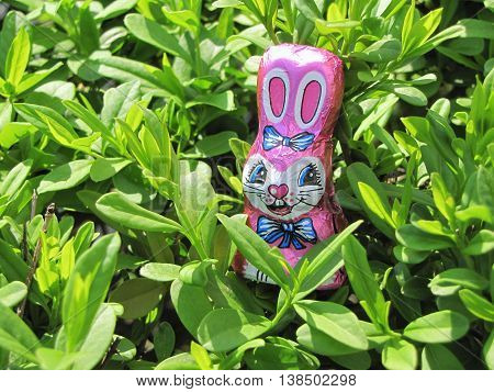 Pink chocolate bunny hiding among green plants