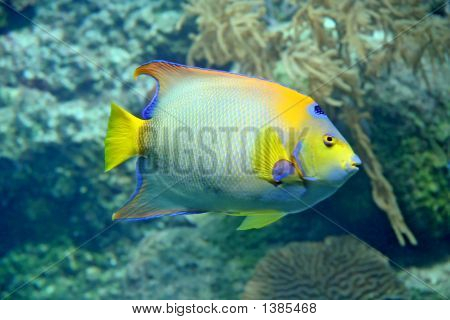 Carribean Reef Fish