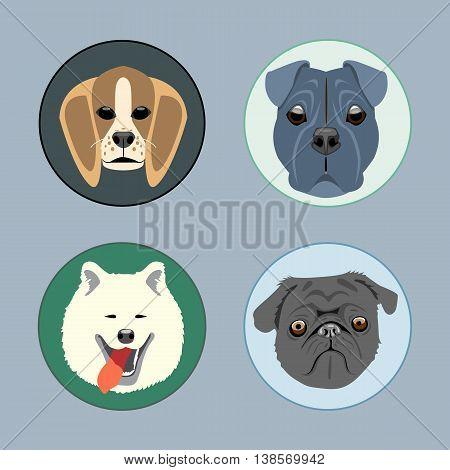 Dogs set flat style. Husky rottweiler taxa victorian. Digital vector image