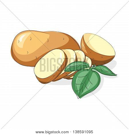 Vector set of new raw whole unpeeled and sliced potatoes with leaves Isolated on white background.