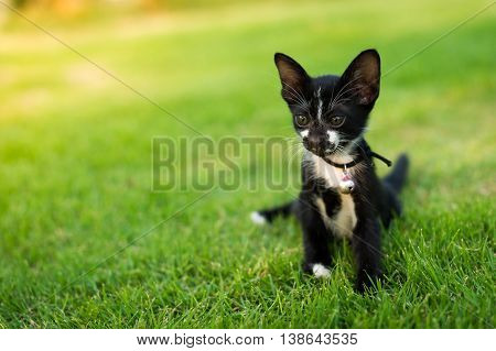 Cute black and white kitty cat sitting in the green grass.