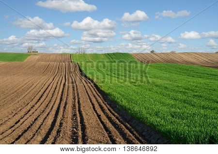 Tilled fields and wheat farm in early spring