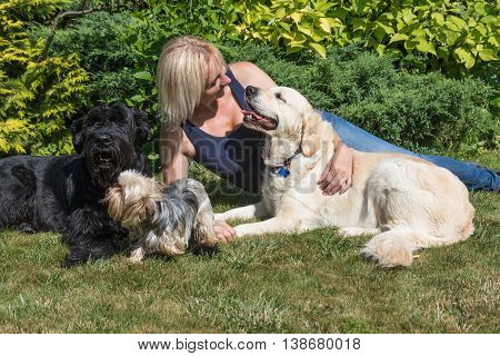 Blond middle age woman is looking at the Golden Retriever and Yorkshire terrier is looking at the Giant Schnauzer dog.