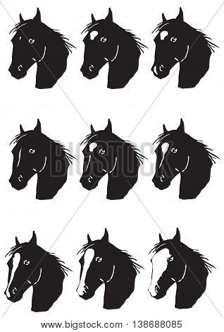 Vector illustration of markins on a horse head - education book