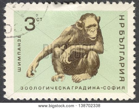 MOSCOW RUSSIA - JANUARY 2016: a post stamp printed in BULGARIA shows a monkey (Pan troglodytes) the series