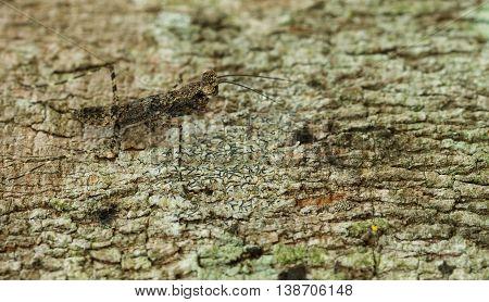 Very tiny mantis tucked on gray bark.