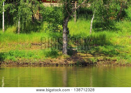 The shore of the lake on a hot summer day in the forest. On its banks is the tree separate from the forest thickets