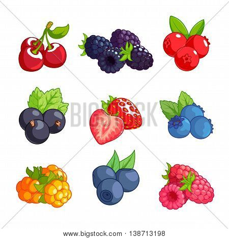 Set of different berries. Cherry blackberry cranberry currant strawberry blueberry cloudberry bilberry and raspberry isolated on a white background.