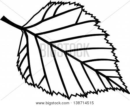 birch ,  isolated birch leaf , birch  ,  birch leaf illustration ,