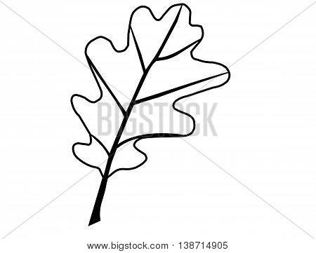 oak , isolated oak leaf , illustration oak leaf ,