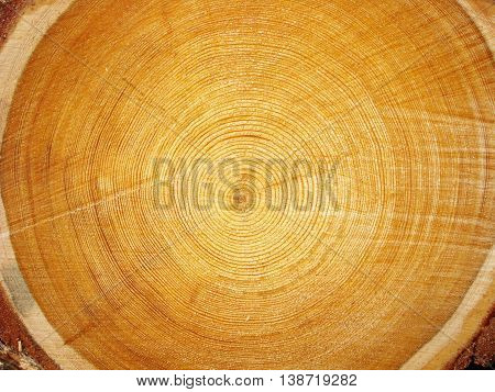 Photo of big logs plan during timber harvesting.