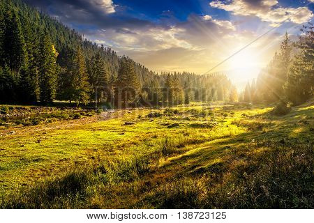 of mountain range with coniferous forest on a meadow in evening light