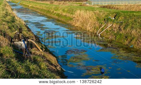 Nature And Water Pollution. Algae And Seaweed In The Water Channel.