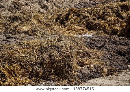 Pile of manure in the countryside. Heap of dung on the farm yard