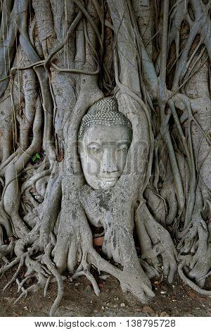 Buddha Head in Tree Roots, Wat Mahathat, Ayuttaya. THAILAND.