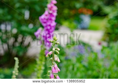Beautiful pink flowers on natural background in Germany
