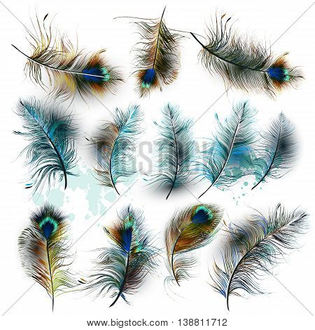 A collection of vector realistic peacock feathers for design