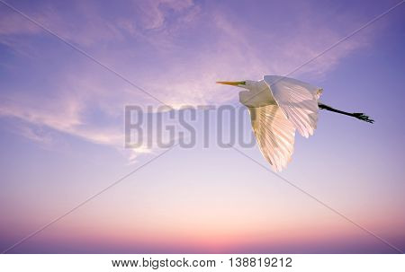 Elegant white Great Egret over pink sunset sky background