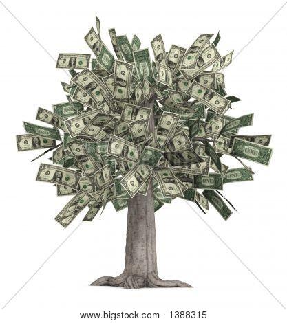 Albero di soldi