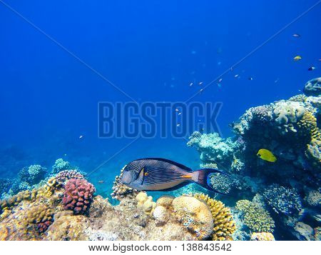 Coral And Fish In The Red Sea. Egypt