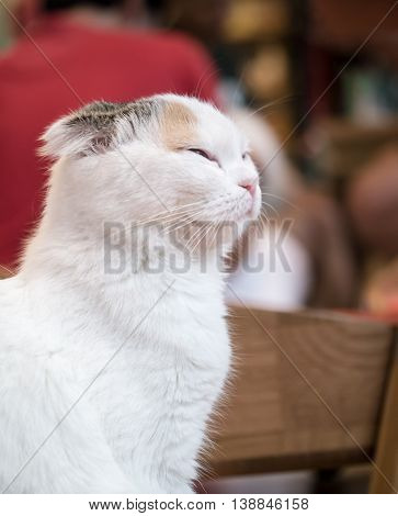 Portrait Of Smiling Cat