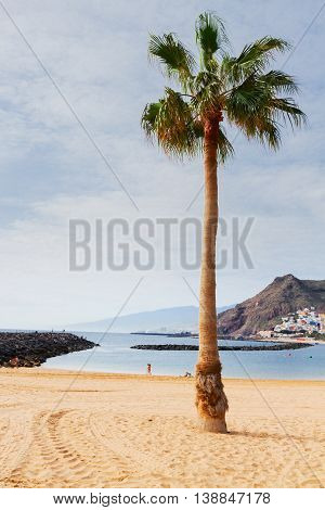 view of beach Las Teresitas with palm tree at sunny summer day, Tenerife island, Canarias Spain