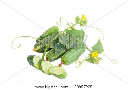 Several whole fresh cucumbers one sliced cucumber and stalk with leaves tendrils and flowers on a light background