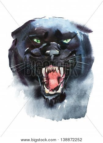 Watercolor drawing of angry looking panther. Animal portrait on white background
