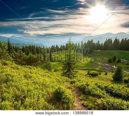 Green pine forest meadow in the mountains at sunset sky background