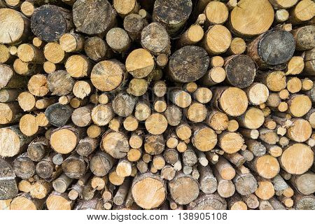 Woodpile of branches and small round tree trunks